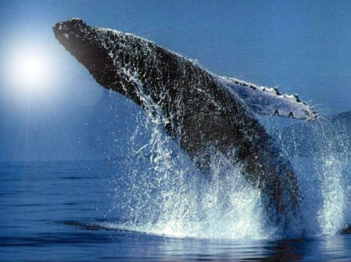 humpback_whale_image